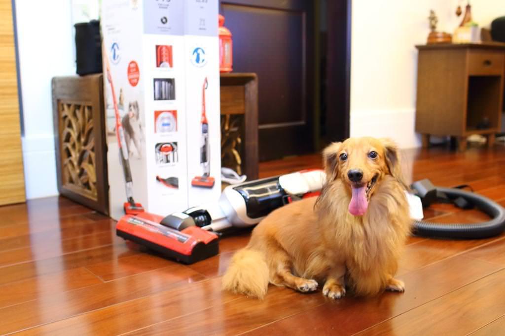 狗奴醫師打造無塵居家,不可不知的毛主人救星, Bosch極效感應無線吸塵器毛髮終結者