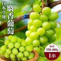 日本麝香葡萄