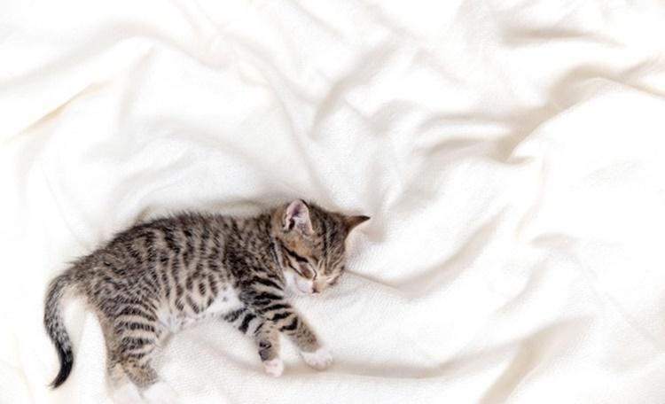 幼貓要怎麼照顧?幼貓吃什麼最營養?飼料與罐頭推薦清單