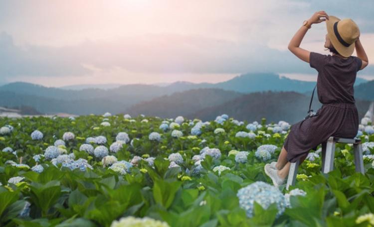 2021端午連假旅遊攻略,6大台灣景點推薦(繡球花季-阿勃勒花季)懶人包