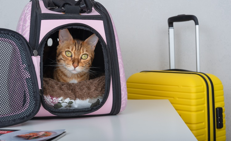 出差時寵物怎麼辦?住宿怎麼挑?TOP7北部寵物寄宿、寵物旅館推薦